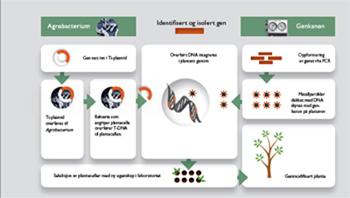 Oversikt over hvordan man kan lage genmodifiserte planter