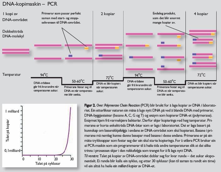 Oppkopiering av DNA ved hjelp av PCR