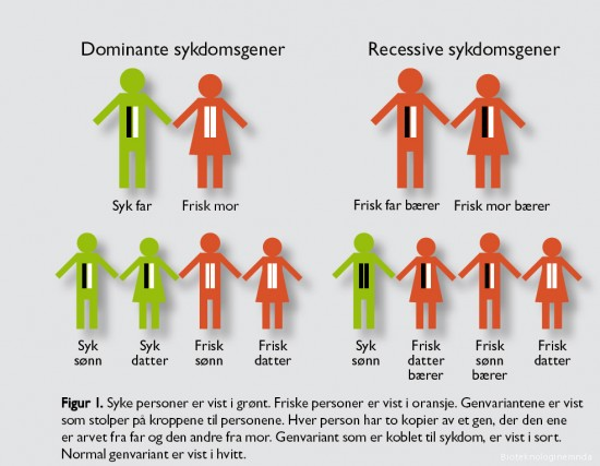 Arvegang for dominante og recessive sykdommer.