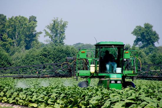 Traktor sprøyter avlingen