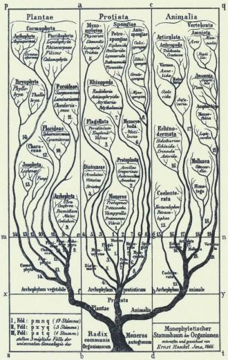 Svart-hvit tegning av tre med forgreninger og de ulike organismegruppene skrevet inn.
