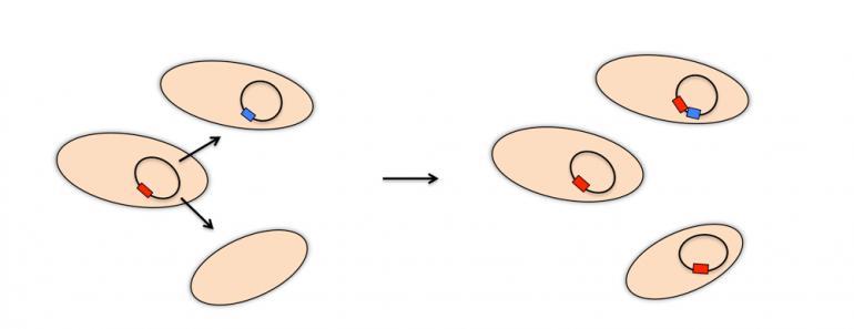 Grafikk: Bakterier kan utveksle resistensgener.