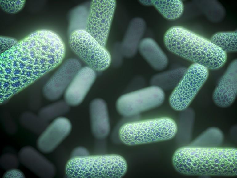 E. coli-bakterie