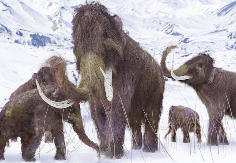 Mammuter i snødekte omgivelser