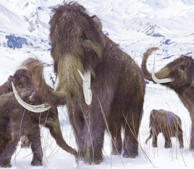 Mammutene kommer! (Kanskje. Håper noen.)