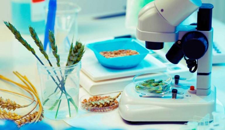 Bilde av mat i laboratorie