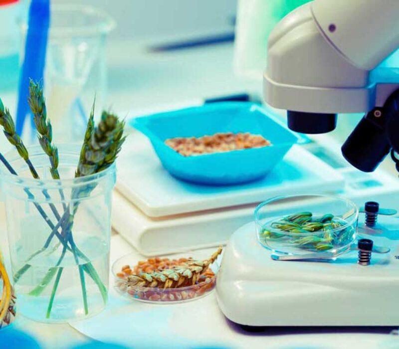 Genredigert mat – en juridisk nøtt