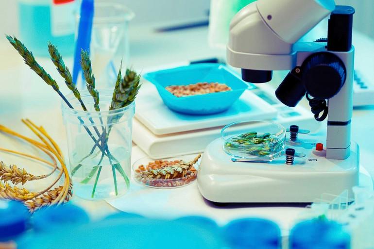 korn og mikroskop