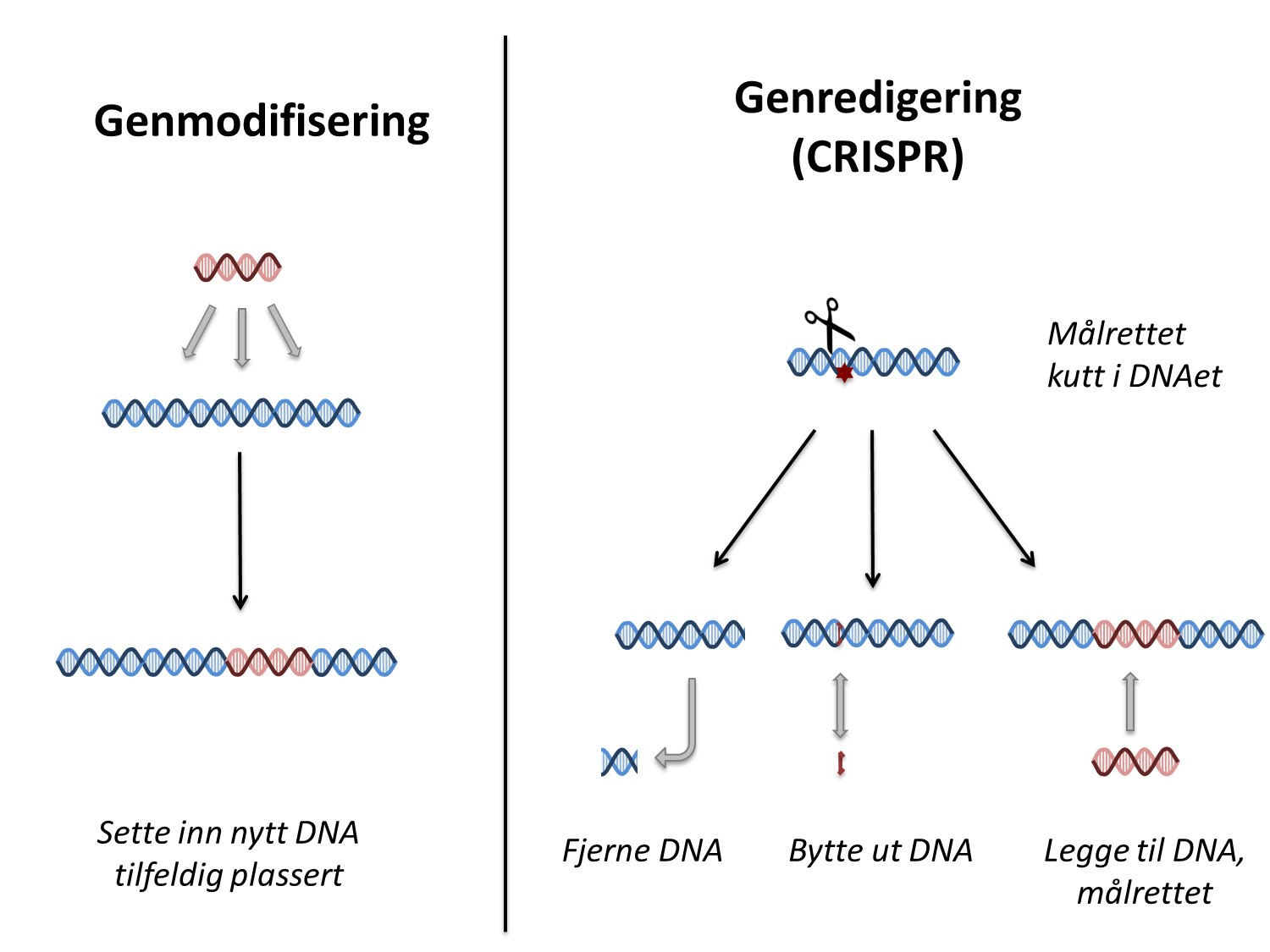 CRISPR vs GMO faktabank fig 2