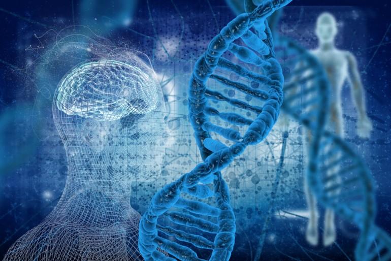 DNA-heliks og menneske