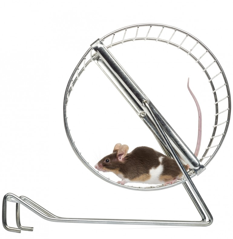 mus i tredemølle