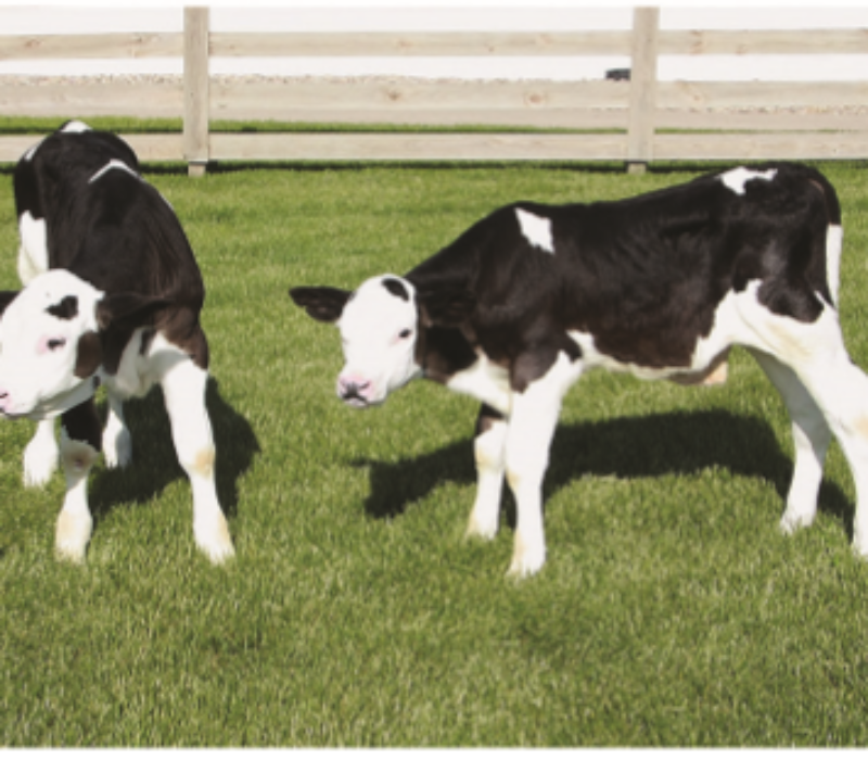 Tok tyren ved hornene – fikk gener for antibiotikaresistens med på kjøpet