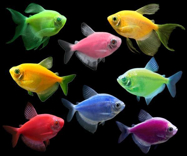 Lysende fisk.