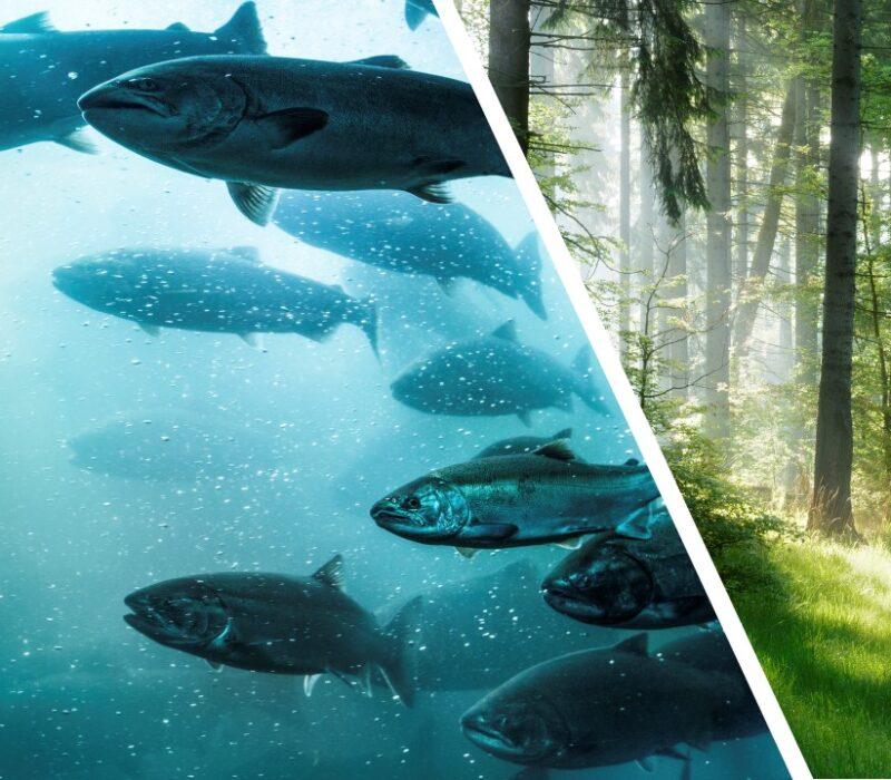 AVLYST: Frokostmøte 19. mars: Vil fremtidens laks spise trær?