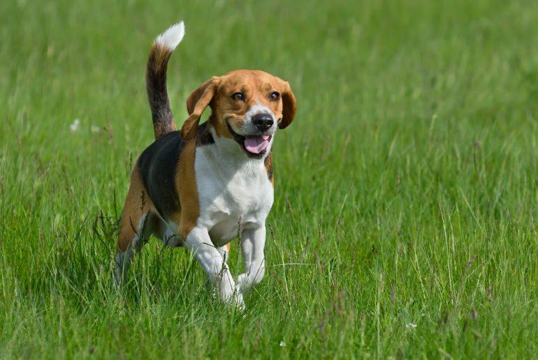 Foto av hund som løper i gresset