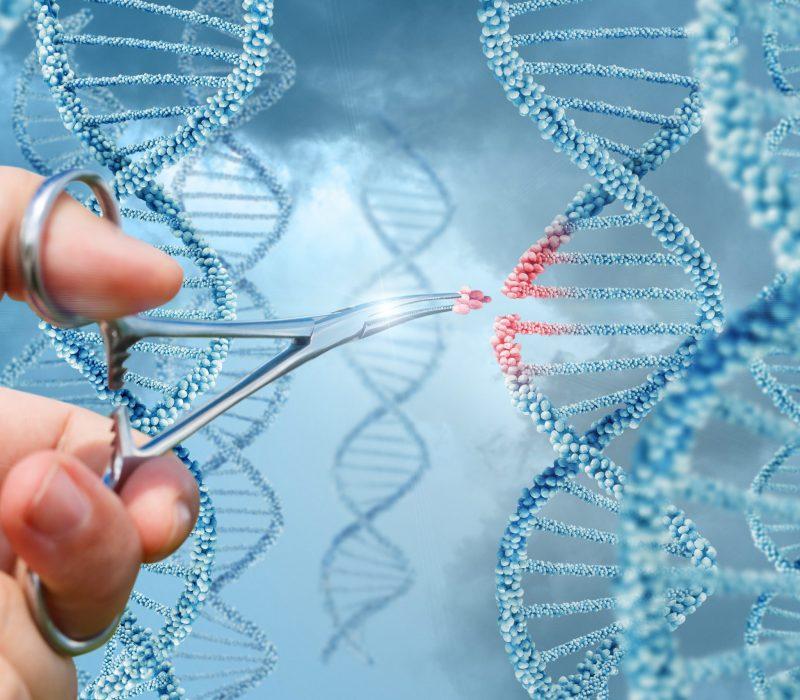 CRISPR i planter og dyr