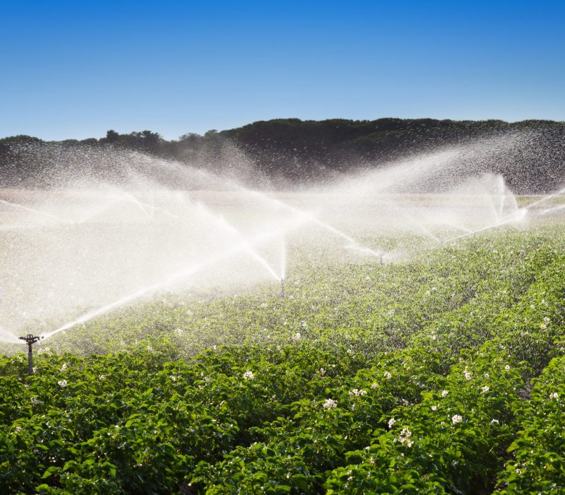 I GENialt: Strid om GMO-regelverket i EU