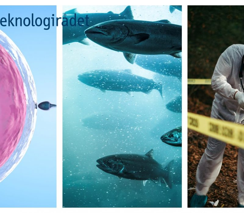To dager – fire byer: Bioteknologidagen 2021