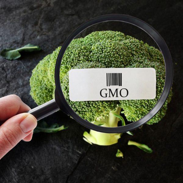 Den nye GMO-debatten